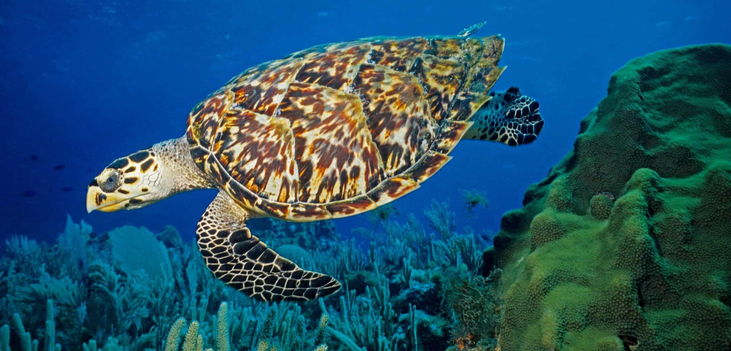 Turtle friendly solar lighting